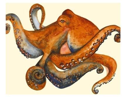 octopus-portrait