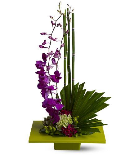 oh la la orchids