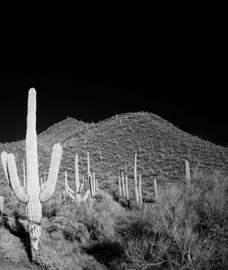 carol-highsmith-cactus-at-night.jpg