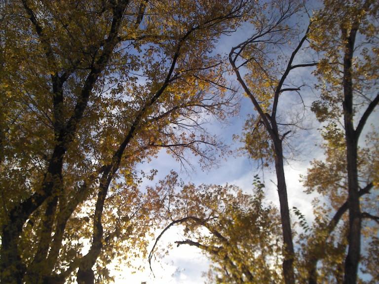 prescott-trees