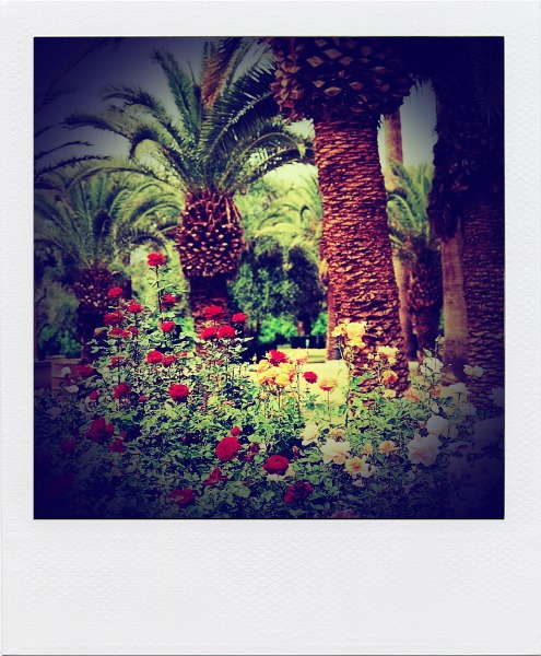 roses-and-palm-trees